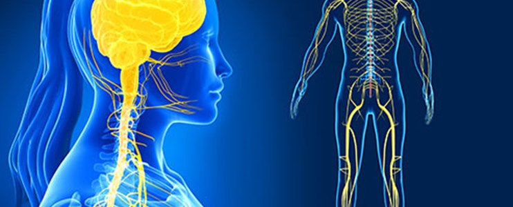 10 Fun facts about the nervous system